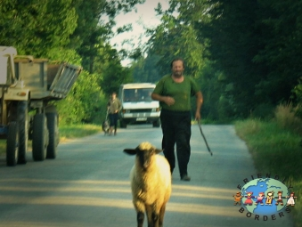 Hungarian Sheepherder chases after his sheep in Sellye