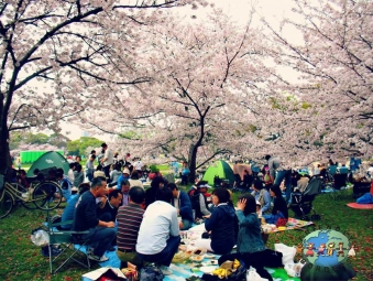 A family picnic under a cherry blossom trees in Tokyo, Japan