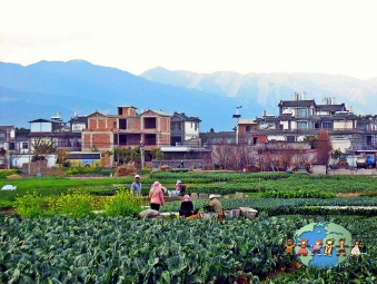 A group of farmers tends to their vegetable plot in Yunnan, China