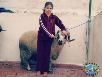 Girl with her families ram in Morocco