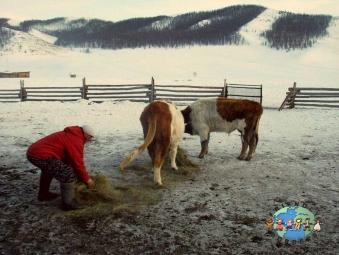 Kazakh farmer in northeastern Mongolia near the Russian border