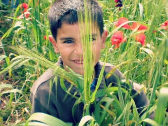Young boy in a field of poppy flowers in the countryside